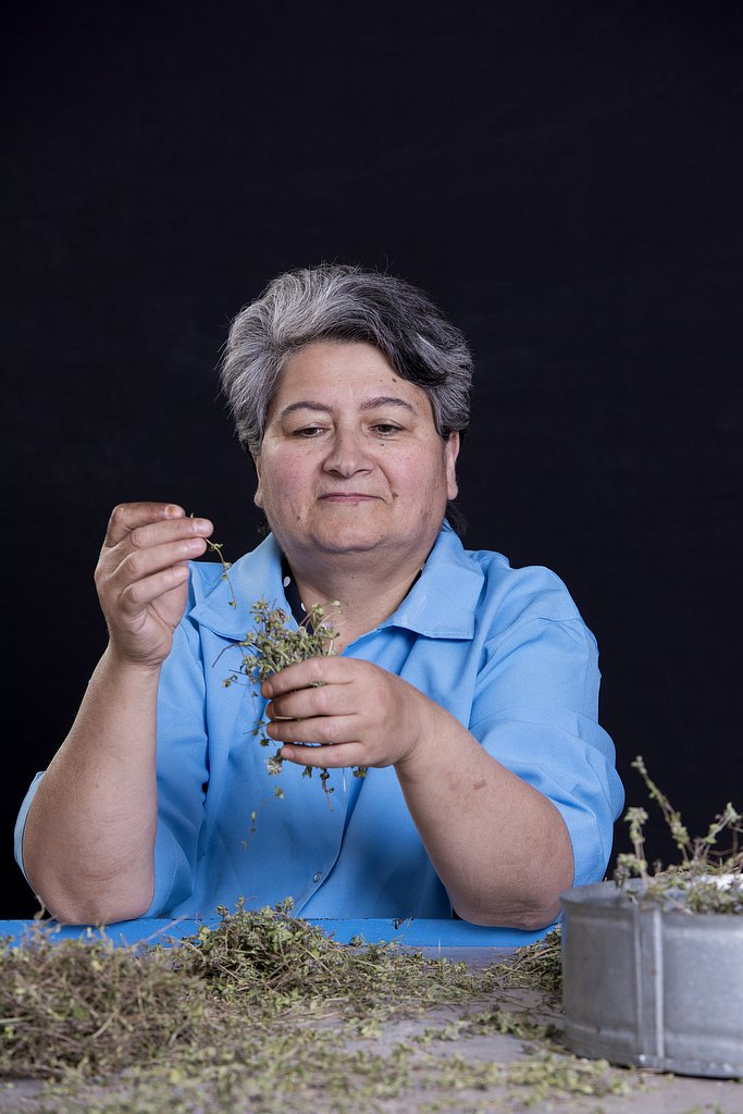 Armenia | Herb Collection
