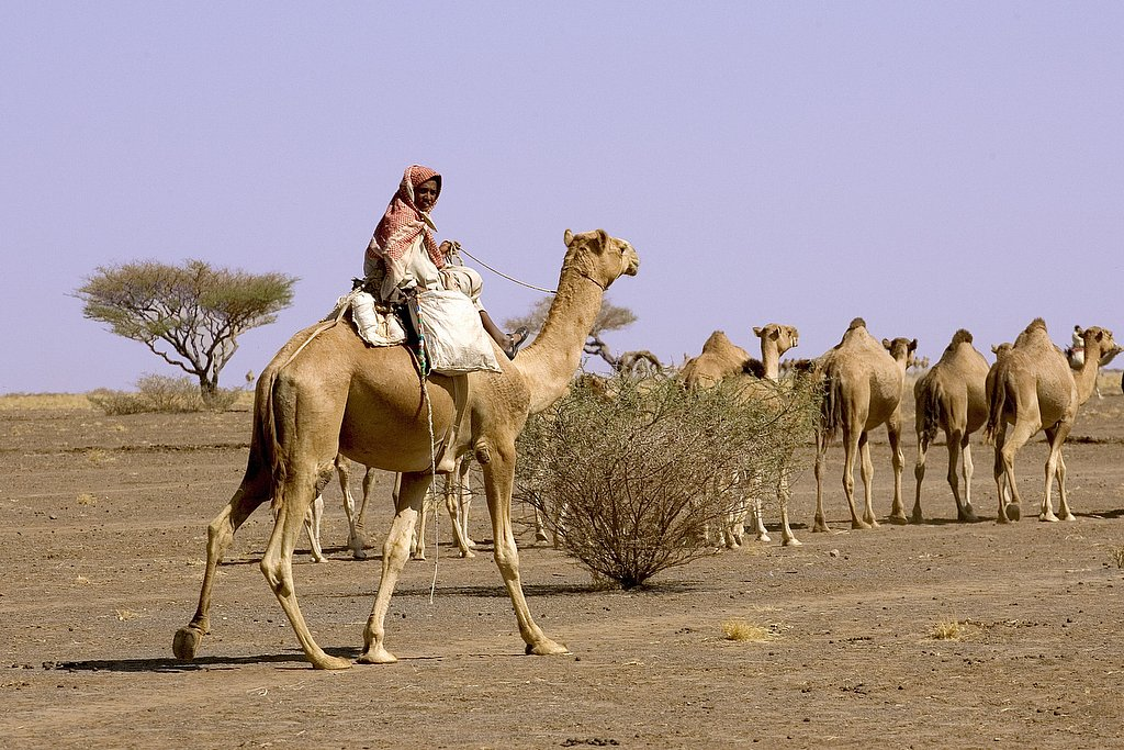 sudan - the dessert
