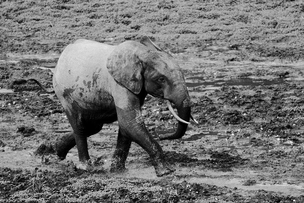 M06RCA0209-Elephants9153.jpg