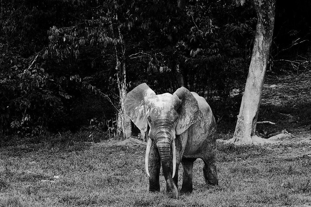M06RCA0205-Elephant0239.jpg