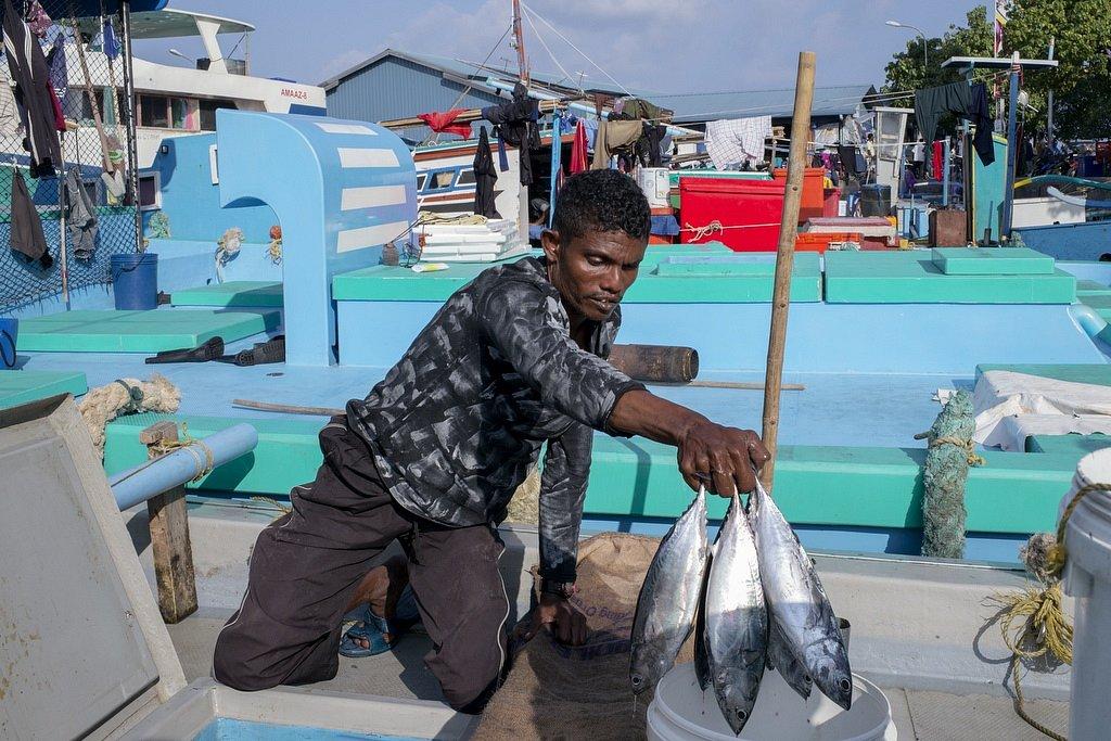 maldives - the fish